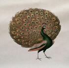 Pavo Real Pájaro En Impreso En Panel De Tela Make A Cojín Tapicería Manualidades