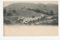 Sheep In The Highlands, Early Tuck Animal Studies 1359 Postcard, B010