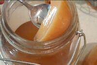 Organic Kombucha Scoby, Starter Tea and Instructions | Scoby for Kombucha