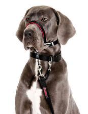 Colliers lumineux noirs pour chien