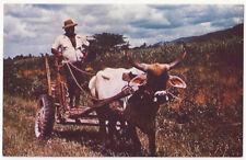 Trinidad Sugar Cane Farm and Ox Cart Vintage Postcard 1950s