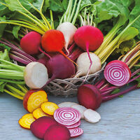 Colorful Beetroot - RAINBOW - Mix of Six Varieties -200 Heirloom Vegetable Seeds