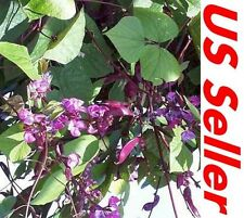 15 Pcs Seeds of Hyacinth Bean E87, Hatch Private Screen Vine Plant Seeds