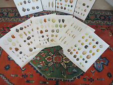 A SET OF 6 VINTAGE DANISH BOTANICAL CHARTS OF SEEDS PRINTED IN 1948