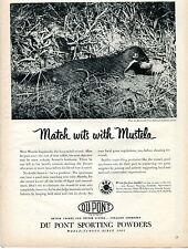 1952 Du Pont Sporting Powders Predator Mustela Longicauda Weasel Print Ad