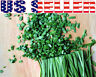200+ ORGANICALLY GROWN Chives Seeds Heirloom NON-GMO Mild Onion Flavor Herb USA