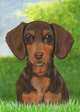 ACEO Dog Dachshund Brown ATC Colored Pencil Painting ORIGINAL Art Sherry Goeben