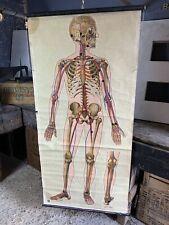 Vintage Antique St Johns Ambulance Skeleton Anatomical Medical Wall Chart J.Teck