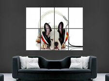 FRENCH BULLDOG POSTER CUTE FUNNY EARPHONES DOG CUTE  ART WALL LARGE IMAGE GIANT
