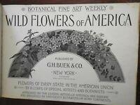 Wild Flowers of America 1894 album 288 chromo-lithographed plates botany book