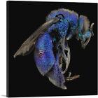 ARTCANVAS Blue Wasp Insect Home decor Canvas Art Print