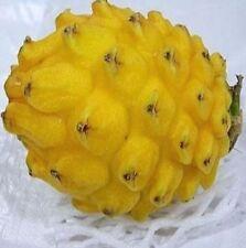 FD854 Yellow Dragon Fruit Seeds Hylocereus Pitaya Seeds Fruits Undatus 10PCs :)