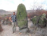 Echinocactus Platyacanthus (5-250 SEEDS) Cactus Samen Semi Korn 種子 씨앗  Семена