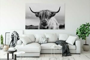 Black And White Scottish Highland Cow Wall Art Large Framed Canvas Picture