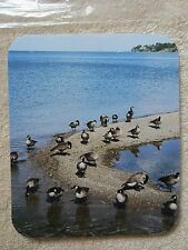 REAL DUCKS NATURE OUTDOORS COLORFUL ART BEAUTIFUL SCENIC MOUSE PAD HIGH QUALITY