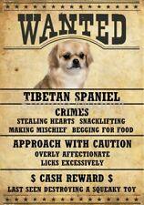 """Tibetan Spaniel Wanted Poster Fridge Dog Magnet Large 3.5"""" X 5"""" #2"""