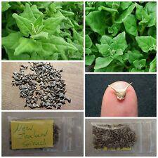 New Zealand Spinach ''Tetragonia Tetragonioides'' ~100 Top Quality Seeds - RARE
