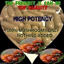 REISHI MUSHROOM WHOLESOME Ganoderma Lucidum The Freshest It Can Be 100 X CAPSULE
