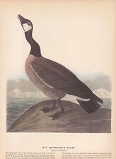 """1942 Vintage AUDUBON BIRDS #277 """"HUTCHIN'S GOOSE"""" CANADA Color Art Plate Litho"""