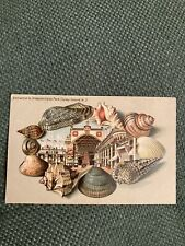 Collectible Postcard Coney Island Ny with embossed shell border