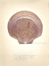 Ocean Seashell SAUCER SCALLOP original SIGNED limited edition handworked Giclee