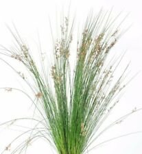 Rush Ornamental Grass Pond Plant Perennial 30+ SEEDS  USA Seller Free Shipping