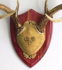 Cedar Ultimate Antler Mounting Kit for Deer - The Taxidermists' Woodshop