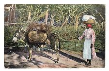 Going To Market - Jamaica Photo Postcard 1905