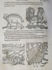 Wolfhart Chronicon Rare Woodcut Leaf Monster Rooster (371) - 1557