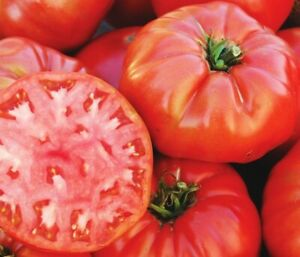 TOMATO (Mortgage Lifter) 25+ seeds :) HEIRLOOM NON GMO. Instructions Included x