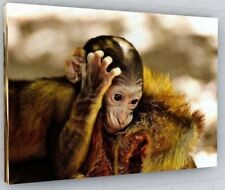 CUTE BABY MONKEY CANVAS PICTURE PRINT WALL ART CHUNKY FRAME LARGE 2135-2