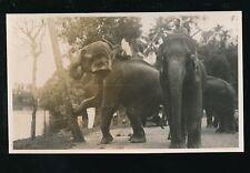 Ceylon Kandy ELEPHANTS pushing over tree 1933 photograph