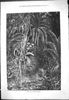 Original Old Antique Print 1877 Scene Tropical Jungle Birds Trees Nature 19th