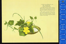 PUMPKIN & PAMPASS GRASS-Kabocha & Susuki-1938 Japanese Flower Arrangement Print