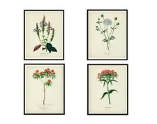 Set of 4 Vintage Botanical Art Print Poster Reproductions by d'Orbigny, 8