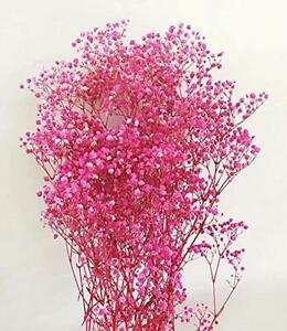 Baby's Breath - Preserved Live Plants - Pink