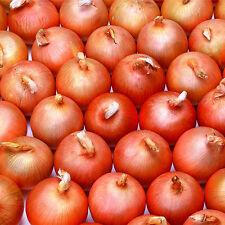 100pcs Onion Seeds Allium Tasty Vegetable Organic Plant Garden Planting
