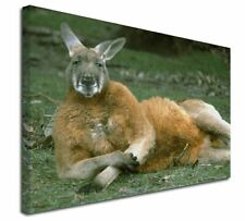 More details for cheeky kangaroo x-large 30