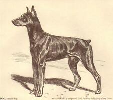 Doberman Pinscher - Vintage Dog Print - 1954 Megargee