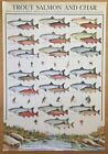 Hobby Poster Chart Trout Salmon Char Poster 27 x 39