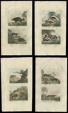 Four (4) Hand Colored Otter, Bat, Skunk Engravings From Buffon Natural History