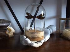 Cabinet de curiosités Oddities Globe insecte Libellule Vestalis luctuosa