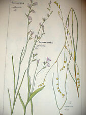 DIETRICH D. Nathaniel Friedrich Flora Universalis 1831-1861 HESPERANTHA Botanica