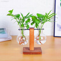 Tabletop Desk Decor Bulb Glass Hydroponic Vase Flower Plant Pot Wooden Tray Gift