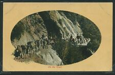 CA Wilson's Peak ROTOGRAVURE c.1908 ON THE TRAIL Pack Train by Newman Art No.54