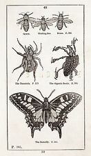"""HISTORY OF THE EARTH"" by Goldsmith - 1810 - BEE, TARANTULA, BEETLE & BUTTERFLY"