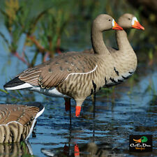 AVERY GREENHEAD GEAR GHG FFD ELITE SPECKLEBELLY FULL BODY GOOSE DECOYS HARVESTER