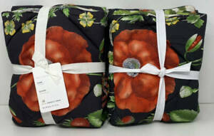 Pottery Barn Poppy Floral KING Quilted Shams (2) ~ Black Multi