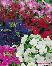 Petunie *Bunter Mix* 200+ Samen *Petunien Samen *Petunia seeds *Blumensamen