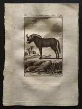 1799 - Buffon - El wildebeest o niou - Grabado zoología